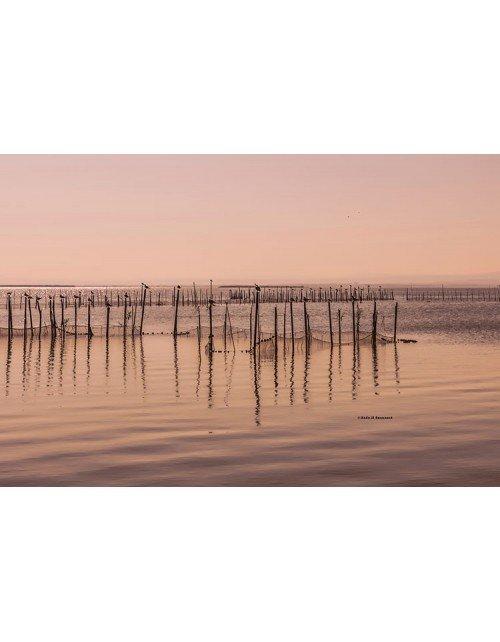 pesca en la albufera-