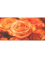 rosas rojas-2