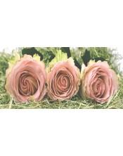 3 rosas
